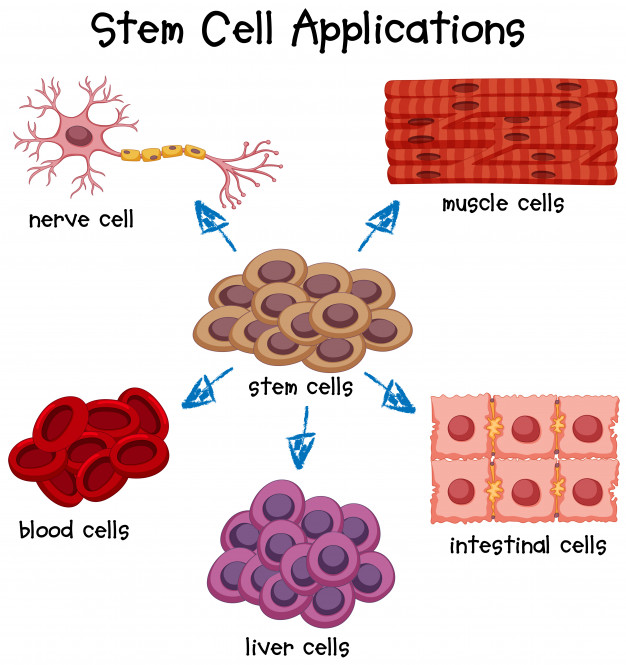 Cell Based Treatments
